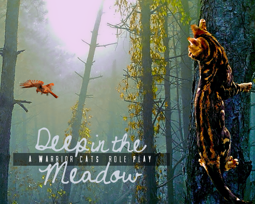 deep in the meadow, a warriors RP Ditmad4