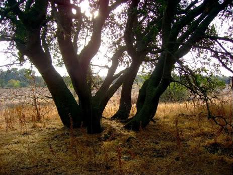 Trees - Page 2 DSC02053