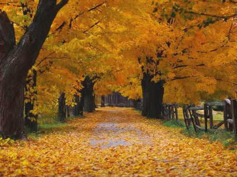 Trees - Page 2 Autumn_scene_1