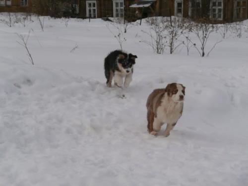 Мои собаки: Зена и Шива и их друзья весты 13c510cfad7d5d871b7fc209040ff29f