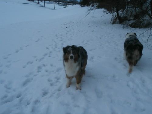 Мои собаки: Зена и Шива и их друзья весты - Страница 2 D691fff56931c1c23cb446c044855203