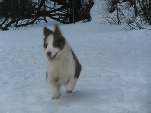 Мои собаки: Зена и Шива и их друзья весты - Страница 2 70eaec75aeb5f30dd45f07adda3a8f2e