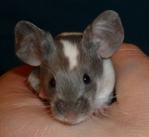 I am just so excited by these new mice from Beth.  0e73bd41