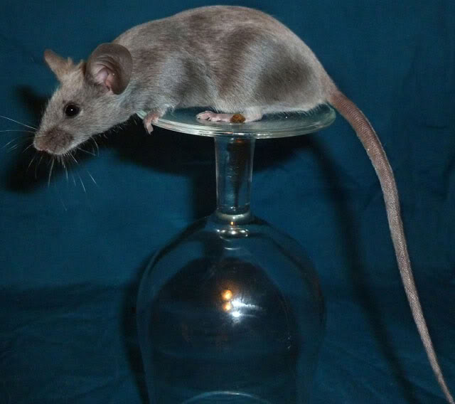 I am just so excited by these new mice from Beth.  414eb333
