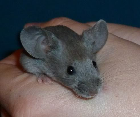 I am just so excited by these new mice from Beth.  6b380157