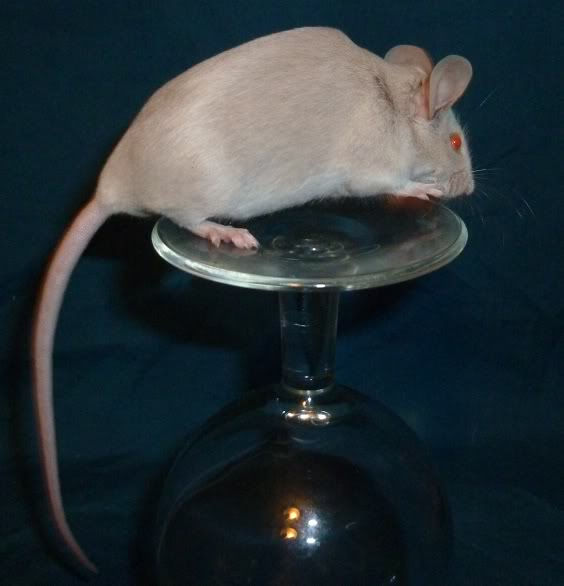 I am just so excited by these new mice from Beth.  6bfa9bb4