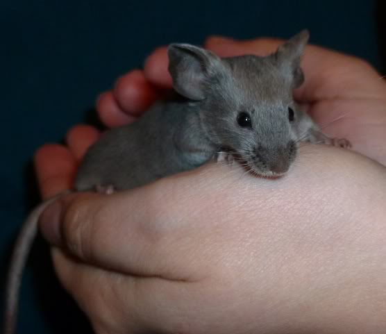 I am just so excited by these new mice from Beth.  7a4ee6df