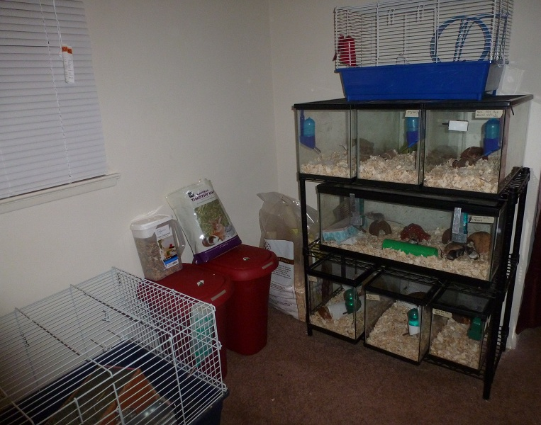 Post pictures of your mouse room! Febmouseupdat032_zps7acf9c8e
