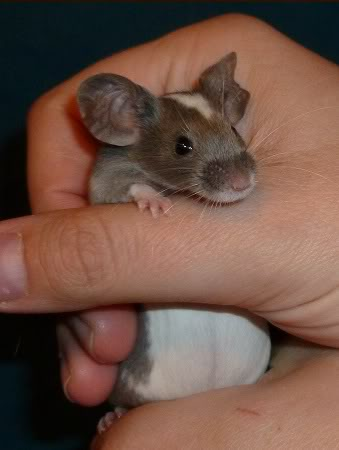I am just so excited by these new mice from Beth.  B18405c1