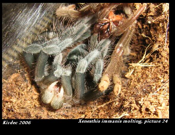 informations generales Theraphosidae Molting24