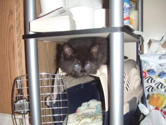 Hi Everyone! Meet my pets DSCF0680-1