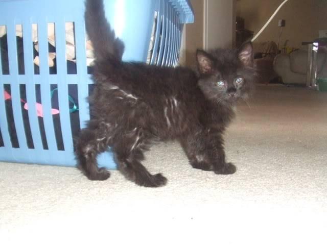 Hi Everyone! Meet my pets DSCF0741-1
