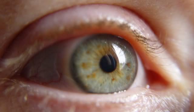 vos yeux! ( attention âmes sensibles: oeil en gros plan ^^) DSC05906