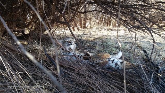 PHOTOS OF CAT SETS - Page 2 20150225_103047_zpslgdnpu85