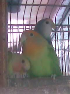 Post your favorite birds Image005