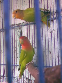 Post your favorite birds Image006-1