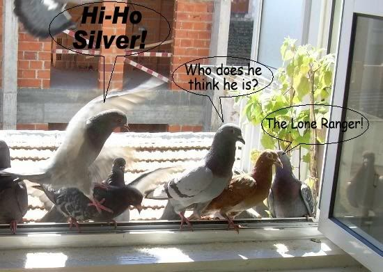 Balcony Pigeon Talent Contest DSCN9997-cr550-B-Lol