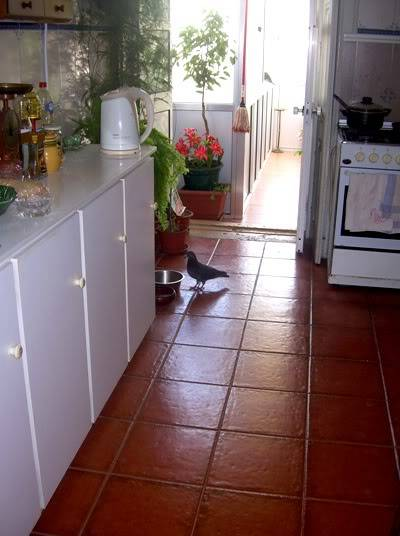 Thieves in my kitchen  :D DSCNB8164-r400