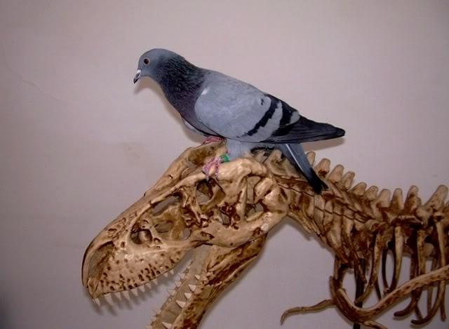 Pigeons and cats DSCNB3606-cr640