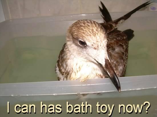 Very sick seagull - Page 3 DSCNB4147-r550-Lol