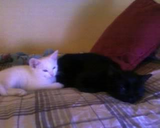 Pet Photos Photo-0012