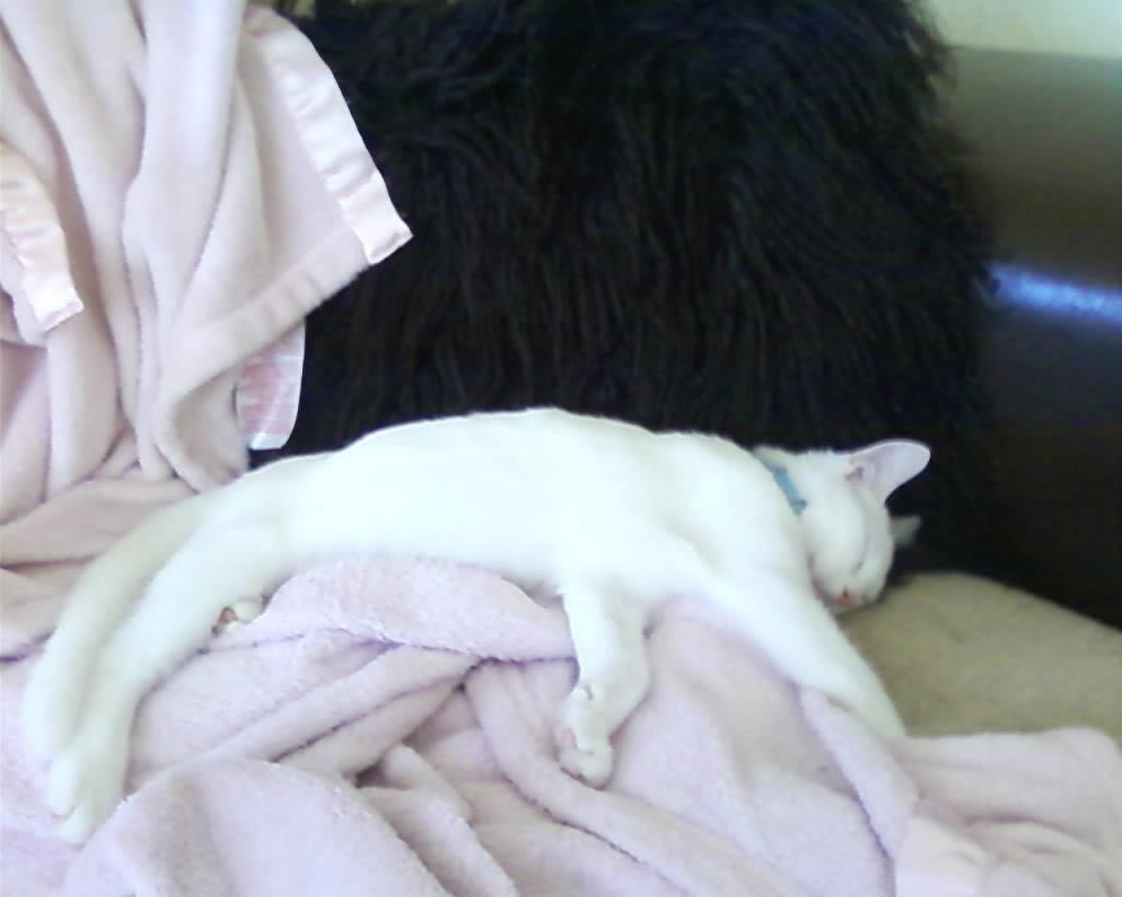 Pet Photos Photo-0044