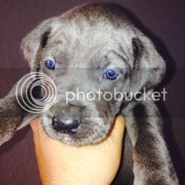 New family member D1D059CF-9847-4D94-8E8F-DE34C8834281