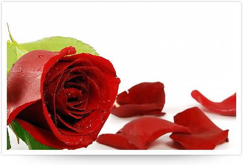 Χρόνια πολλά στις Ειρηνούλες Roses