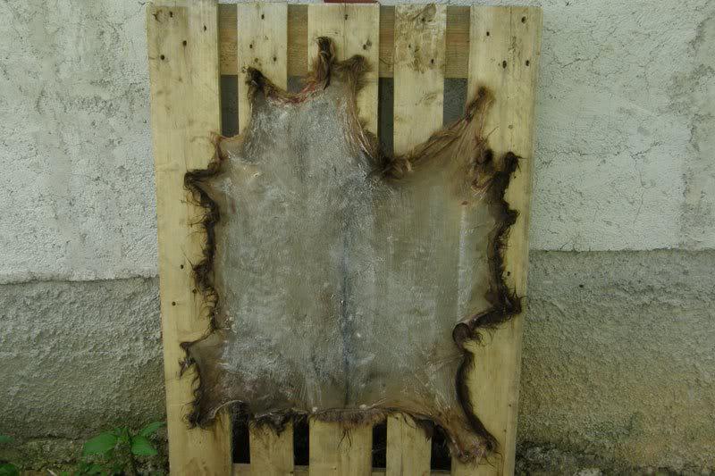 Štavljenje i obrada kože - Page 2 Koza