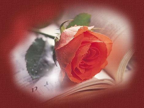 ♥AMORE È ♥ ....: - Pagina 8 Rosa1530paai2