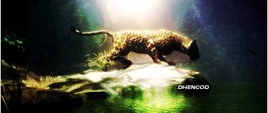 Galeria Dhencod [Ult. Act. 19-Nov-2011] Leopard