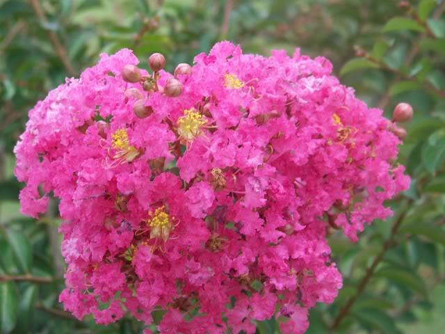 Cvetna oaza 100_1592