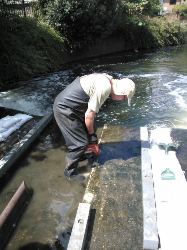 Improving fish passage on the Hogsmill, 17-20th July, Volunteers needed  - Page 2 WP_001022
