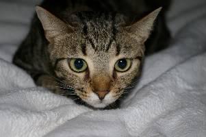 Pets anyone? Gato004