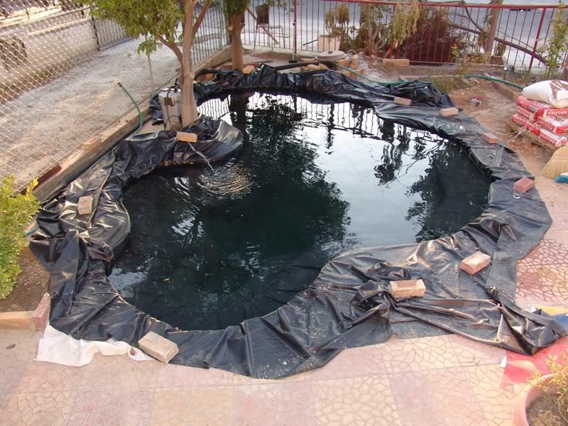 My Pond in Nicosia (CYPRUS) 16