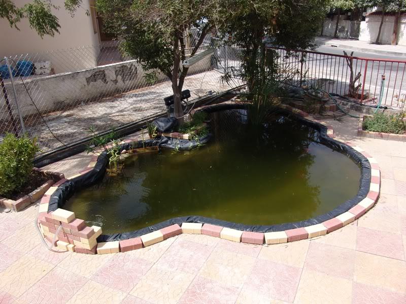 My Pond in Nicosia (CYPRUS) 20