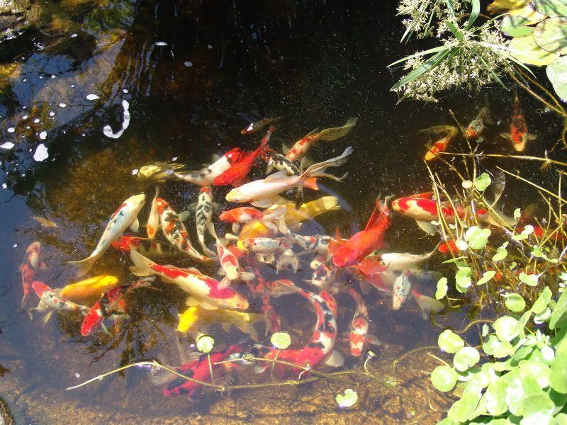 My Pond in Nicosia (CYPRUS) DSC00449