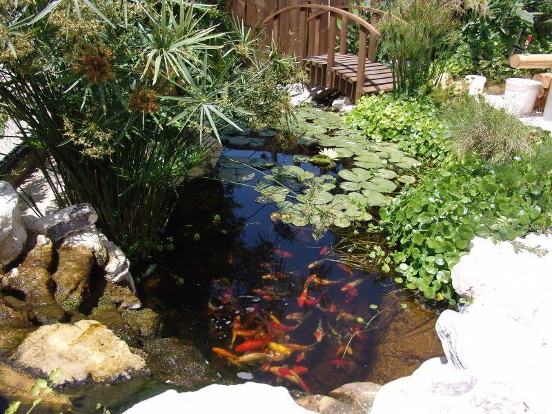 My Pond in Nicosia (CYPRUS) DSC00451