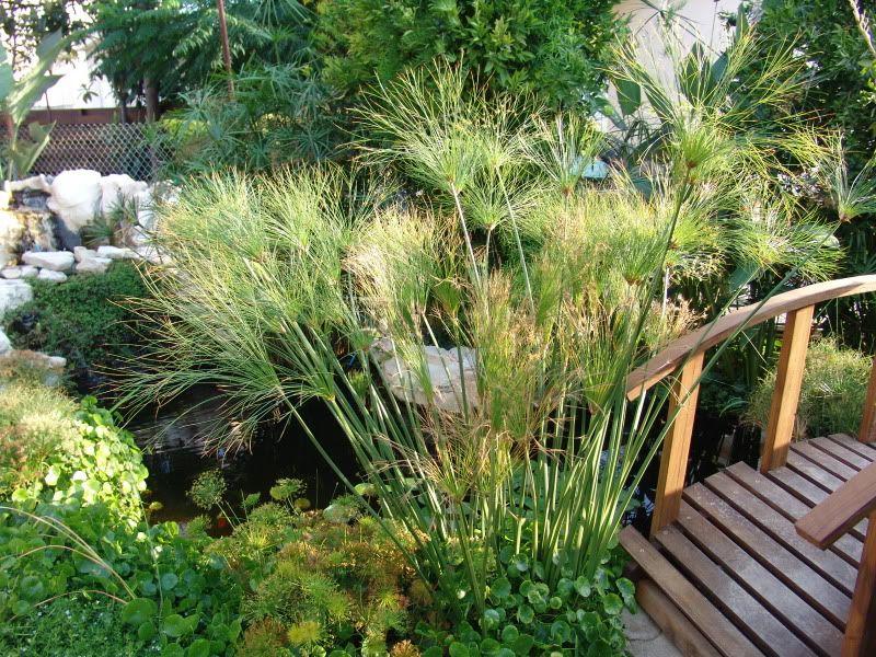 My Pond in Nicosia (CYPRUS) DSC00610
