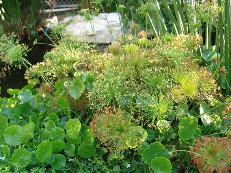 My Pond in Nicosia (CYPRUS) DSC00612