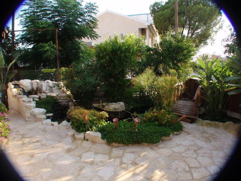 My Pond in Nicosia (CYPRUS) DSC00615