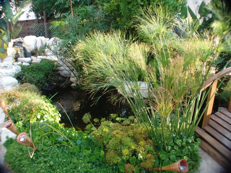 My Pond in Nicosia (CYPRUS) DSC00616