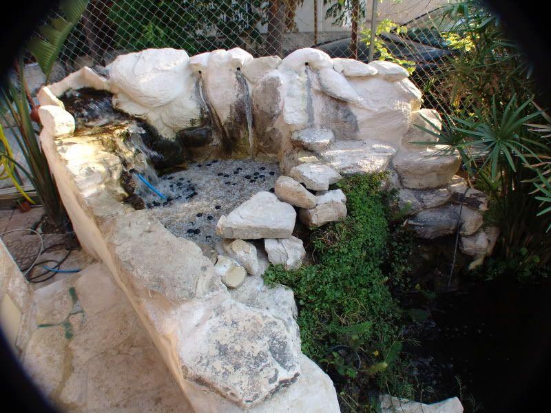 My Pond in Nicosia (CYPRUS) DSC00620
