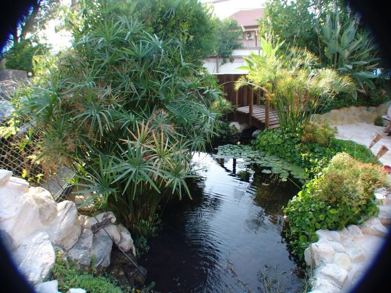My Pond in Nicosia (CYPRUS) DSC00621