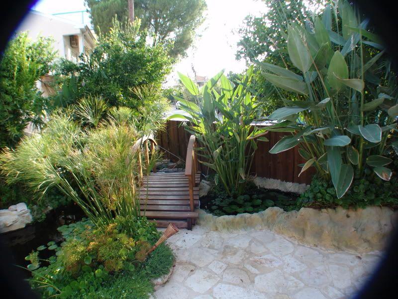 My Pond in Nicosia (CYPRUS) DSC00622
