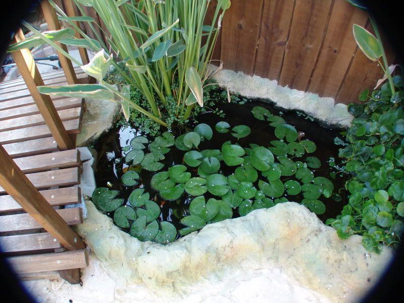 My Pond in Nicosia (CYPRUS) DSC00623