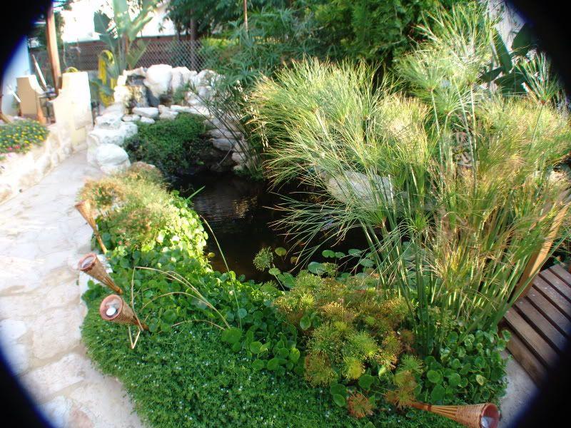 My Pond in Nicosia (CYPRUS) DSC00624