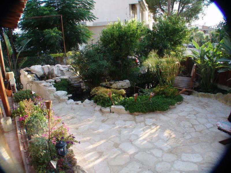 My Pond in Nicosia (CYPRUS) DSC00626