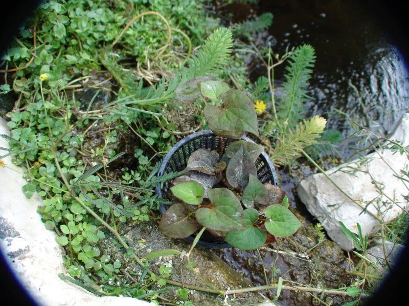 My Pond in Nicosia (CYPRUS) DSC00632