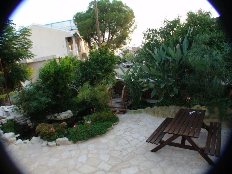 My Pond in Nicosia (CYPRUS) DSC00634